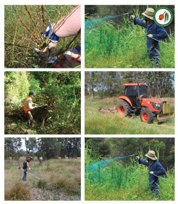 Earth Repair Ecology