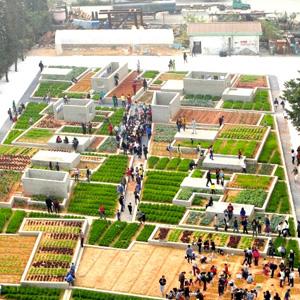 value farm image 3