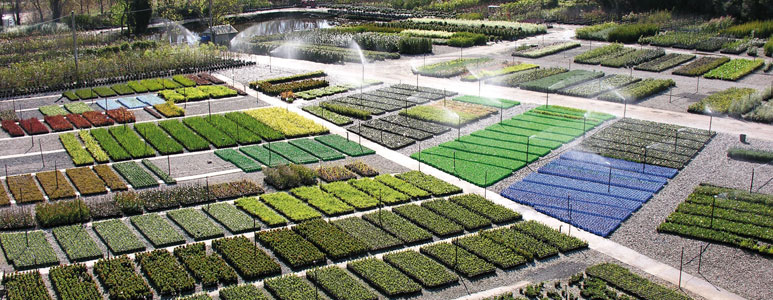 Din san nurseries in soft landscaping outdoor design for Soft landscape materials
