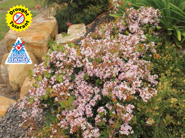 Cosmic pink product ods for Soft landscape materials