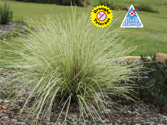 Variegated tanika product ods for Soft landscape materials