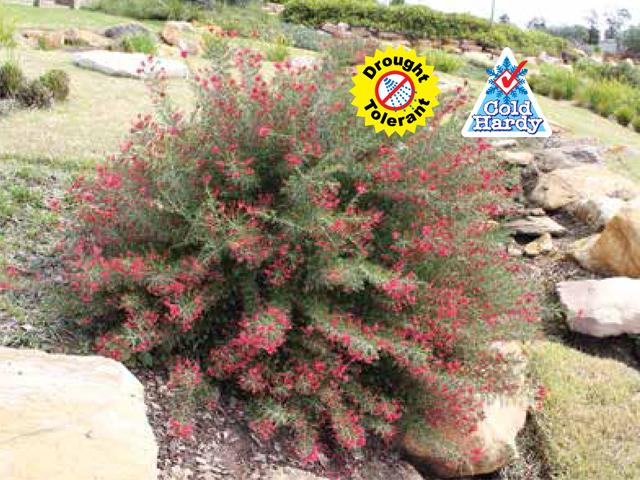 Crimson villea product ods for Soft landscape materials