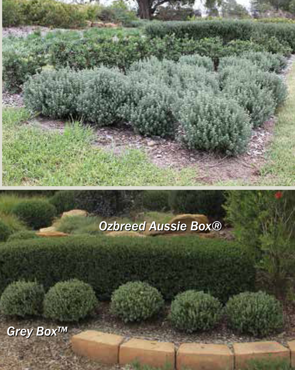 Grey box product ods for Soft landscape materials