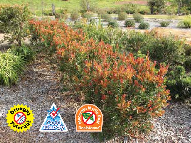 Red alert product ods for Soft landscape materials