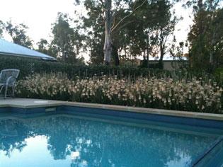 Hardy horticulture | AloeAloeFour | ODS
