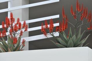 Hardy horticulture | AloeAloeOne | ODS