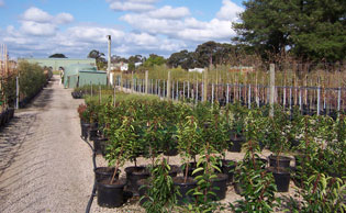 High quality trees | FarmersNovemberFour | ODS