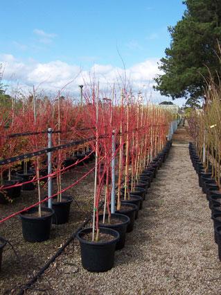 High quality trees | FarmersNovemberOne | ODS