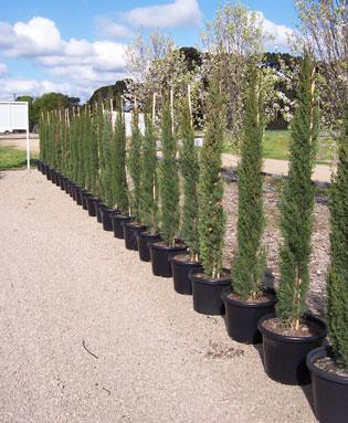 High quality trees | FarmersNovemberThree | ODS