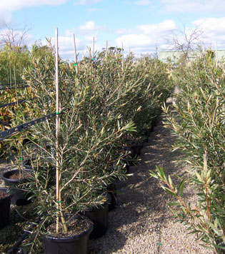 High quality trees | FarmersNovemberTwo | ODS