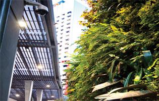 Glorious Green Roofs | PlantUpFour | ODS