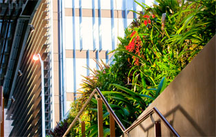 Glorious Green Roofs | PlantUpThree | ODS