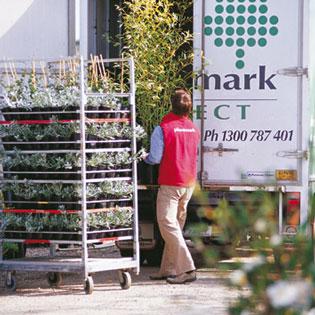 Trade price plants | Plantmarkfour | ODS
