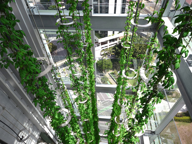 Sculptures of living green ods Green walls vertical planting systems