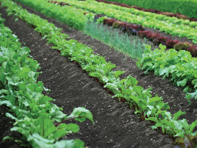 The arrt of organics ods for Soft landscape materials