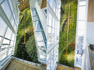 World's tallest indoor living wall | TallestLivingWall_1-2014050513992669929265 | ODS
