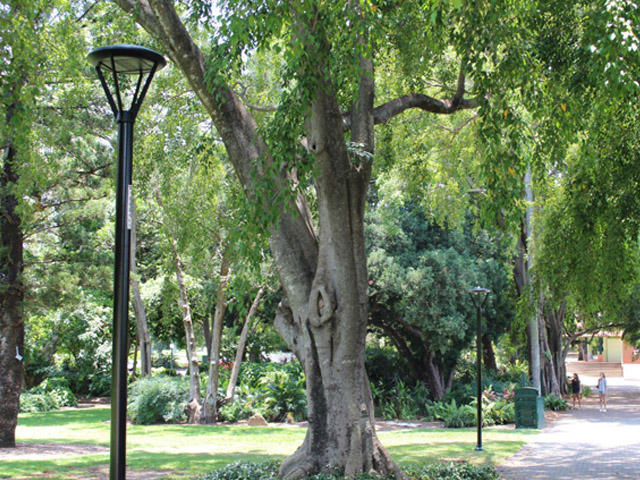 Botanic Gardens Ablaze | adlt1 | ODS