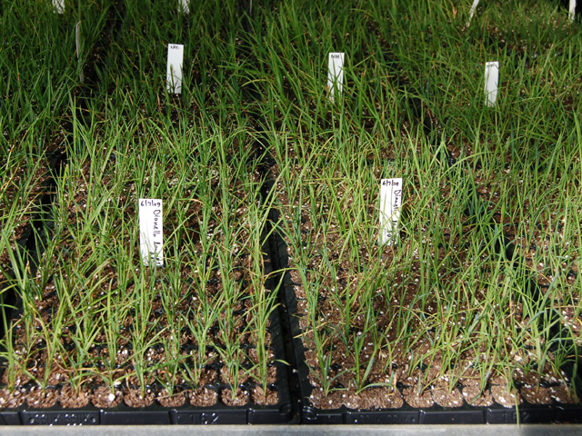 Specialised seed collectors | andreasens_propagation_hero-2013091113788579866613 | ODS