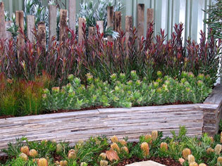 Proteaflora - The Protea Experts | arid-story | ODS