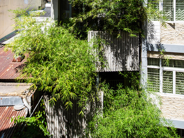Vertical Landscaping | bamboo2-2017051714949877275702 | ODS
