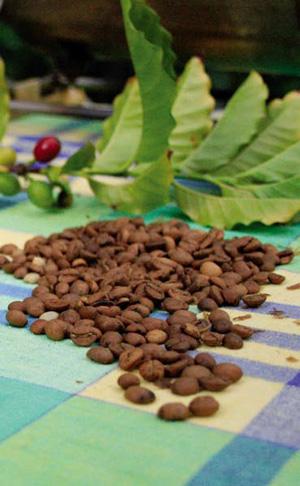 Caffeine hit for plants | caffeine1 | ODS