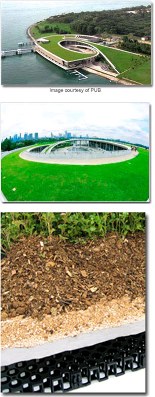 Beauty and environmental benefits meet on a rooftop | elmich_3_l | ODS