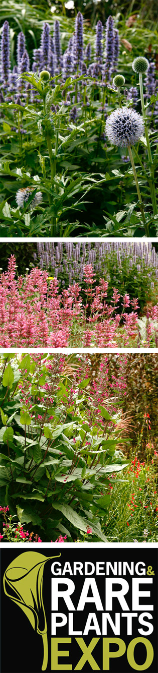 Gardening and Rare Plants Expo | gardening_expo_1_l | ODS