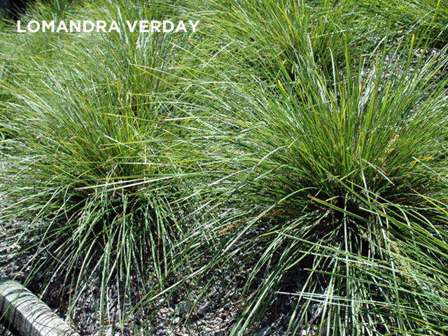 The hardy choice for landscaping ods for Soft landscape materials