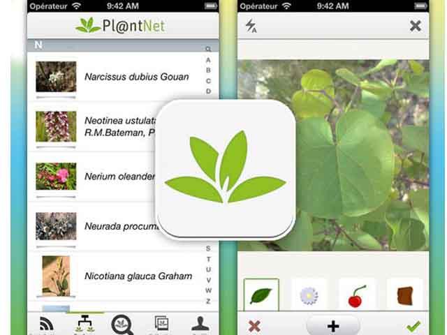 New App: 'Shazam' for Plants | shazam11-2016121214815232931518 | ODS