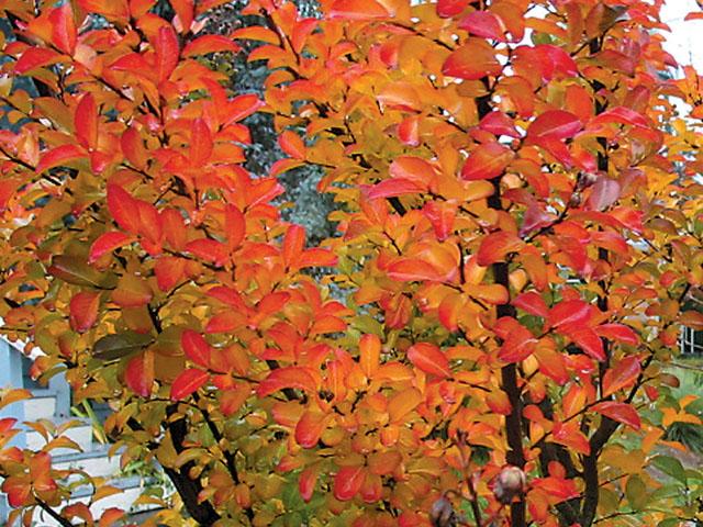 Image Result For Seasons Nurserya