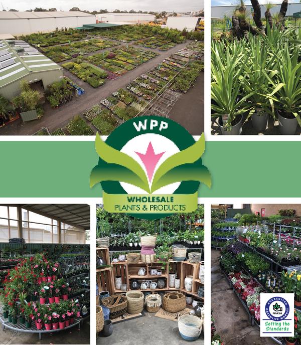 Wholesale Plants Amp Products Pty Ltd Ods