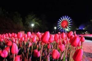 Floriade - More than a walk in the park