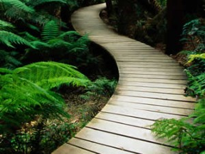 Designing accessible paths for all
