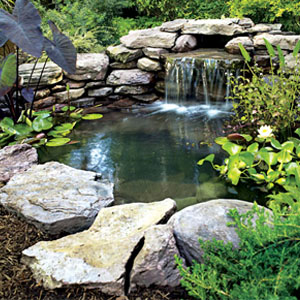 Pondering about a pond?