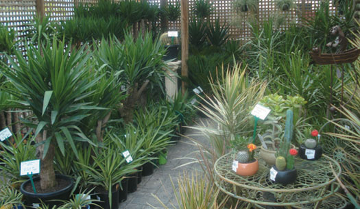 ornamental plants nursey Milberger's landscape and nursery is your only destination for your home and commercial gardening needs  ornamental trees palm trees  saws watersaver plants .
