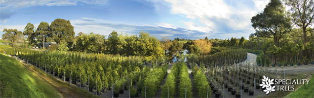 Speciality Trees Pty Ltd | ODS