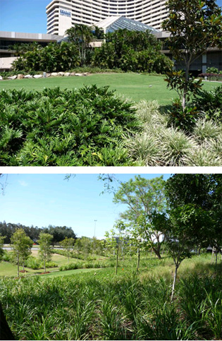 Organic Fertilisers and Soil Conditioners | enviroganics | ODS