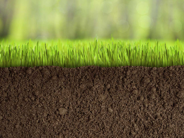 Using Turf for Erosion Control | ozbreed1-2016120714810844635843 | ODS
