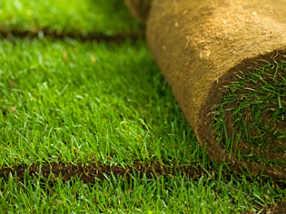 Using Turf for Erosion Control | ozbreed2-2016120714810844646200 | ODS