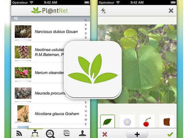 New App: 'Shazam' for Plants - Project | ODS